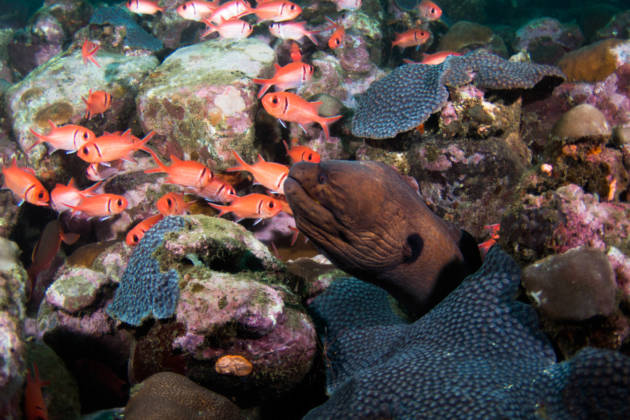Witness São Tomé unique biodiversity!